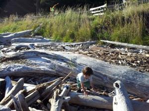 Driftwood on Eastsound beach